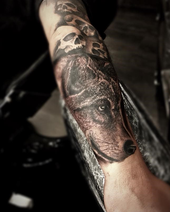 Wolfs Head Forearm Tattoo in Black and Grey by Tattoo Artist Alan Lott at Sacred Mandala Studio.